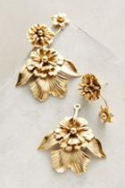 Elizabeth Cole Lenox Earring Set Lookmazing