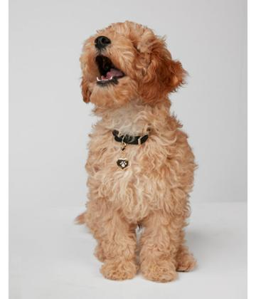 Express Womens Heart Paw Print Dog Charm