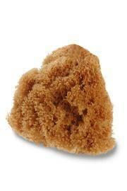 Deep Sea Full Body Sponge