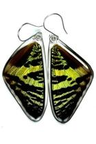 Sunset Butterfly Earrings