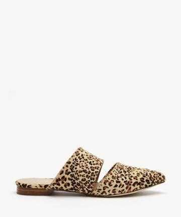 Matisse Matisse Women's Berlin In Color: Leopard Mules Size 6 Haircalf From Sole Society
